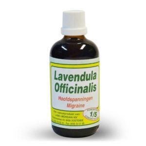 Mordan Lavendula Officinalis 1 liter